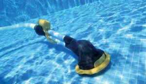 В бассейне санитарный день